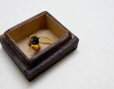 2017.4.19(水)〜5.1(月) 硝子の標本 つのだゆき個展